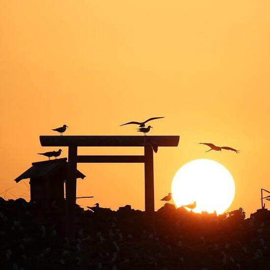 夕日の美しい神域にウミネコが集まる経島
