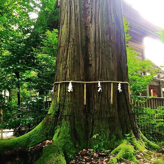 指折りのパワースポット須佐神社