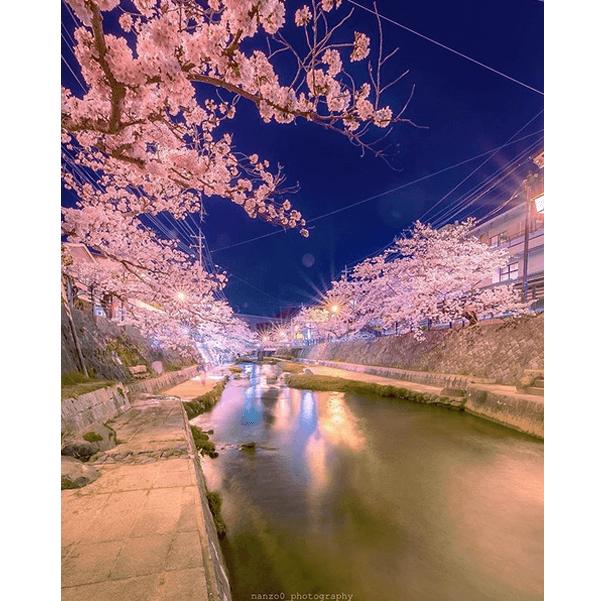 島根県内で5位!玉湯川堤の桜並木