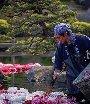 春のおもてなし!池泉に浮かぶ三万輪の牡丹