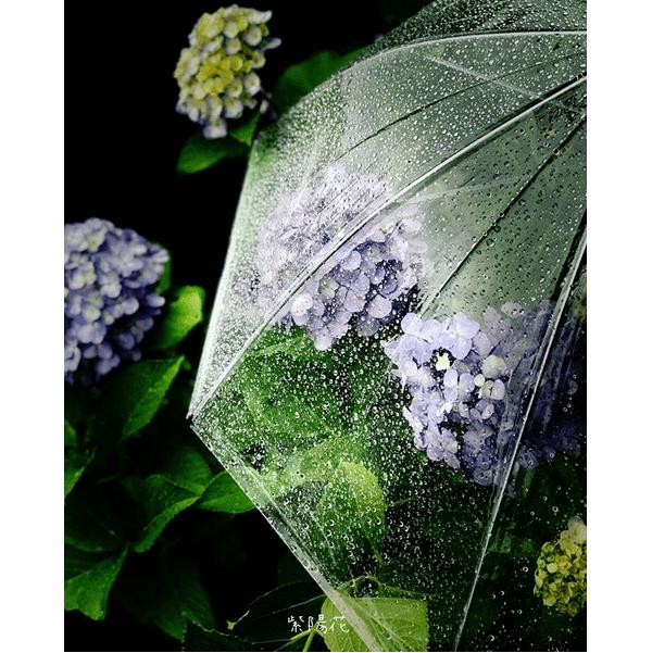 梅雨も楽しい♪雨と紫陽花